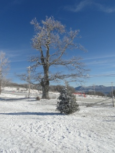 Christmas 2012 and Beech Mtn 141
